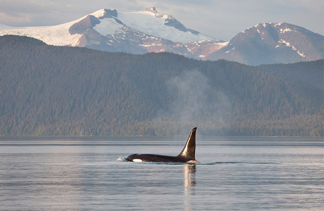 what is the best time to take a cruise in alaska